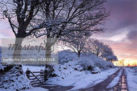 Snow covered arbres à côté d'un chemin de campagne, Exmoor, Somerset, Angleterre, Royaume-Uni, Europe
