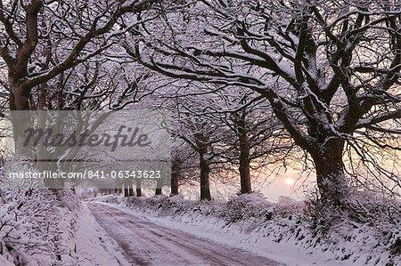 Bordée d'arbres chemin de campagne chargé de neige, Exmoor, Somerset, Angleterre, Royaume-Uni, Europe