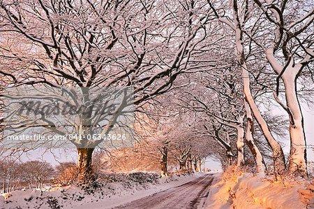 Soleil du matin illumine une ruelle enneigée de Exmoor, Exmoor, Somerset, Angleterre, Royaume-Uni, Europe