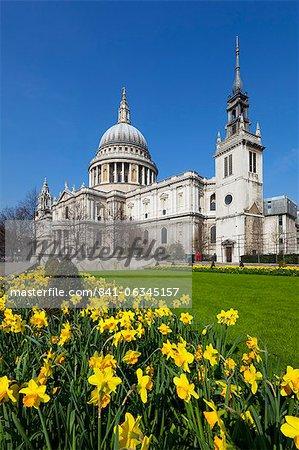 Saint Paul's Cathedral mit Narzissen, London, England, Vereinigtes Königreich, Europa
