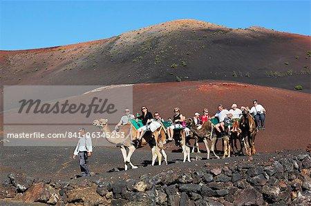 Dromedar-Ritt auf Pisten der Berg Timanfaya Nationalpark Timanfaya, Lanzarote, Kanarische Inseln, Spanien, Europa