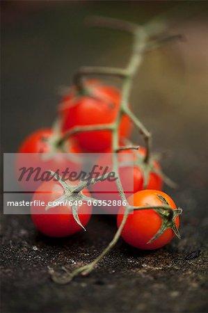 Nahaufnahme von Cherry-Tomaten auf Weinrebe