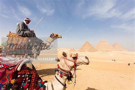 Homme de Bédouins avec chameaux devant les grandes pyramides de Gizeh. Égypte