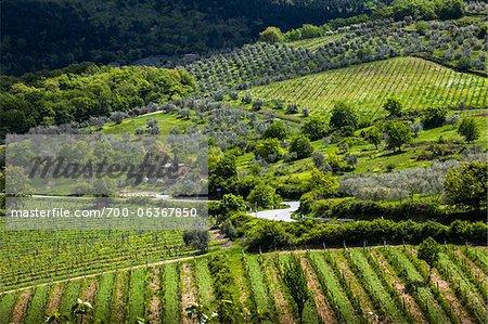 Vue d'ensemble des vignobles, Greve in Chianti, Chianti, Toscane, Italie