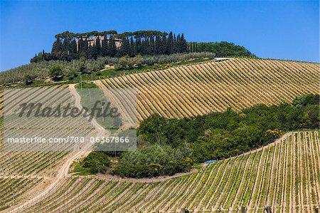 Vue d'ensemble des vignobles, Lilliano, Chianti, Toscane, Italie
