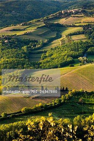 Terres agricoles, Radda in Chianti, Toscane, Italie