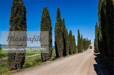 Vehicle on Tree-Lined Road, Montalcino, Val d'Orcia, Tuscany, Italy