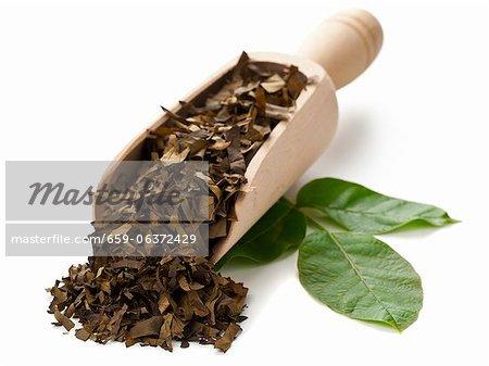 Feuilles de noyer, séchées et hachées, sur une pelle et de feuilles fraîches de noyer