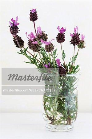 Flowering lavender in a vase
