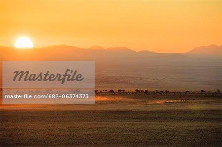 Coucher de soleil sur la course de chevaux, désert du Namib, Aus, Karas, Namibie