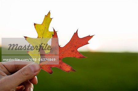 Gros plan de la main tenant l'automne laisse