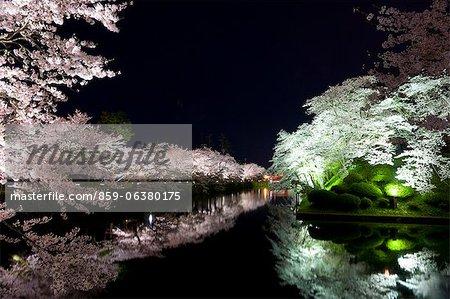 Yozakura, sanctuaire Uesugi, préfecture de Yamagata, Japon