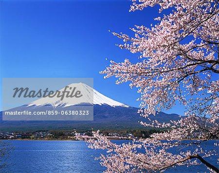 Mt. Fuji de Kawaguchiko, préfecture de Yamanashi, Japon