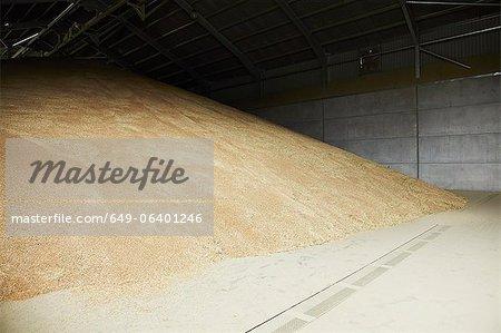 Tas de grain stocké dans l'entrepôt