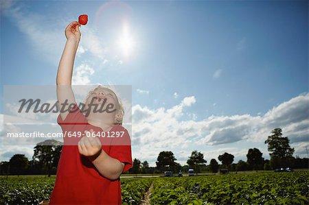 Boy holding strawberry in field