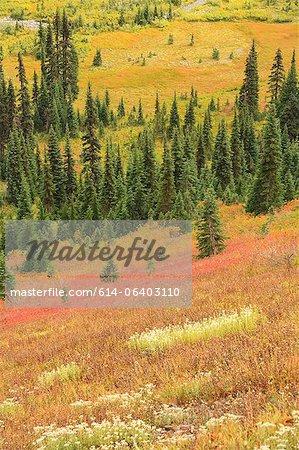Couleurs d'automne dans la toundra alpine, Parc National du Mont Rainier, Washington, USA
