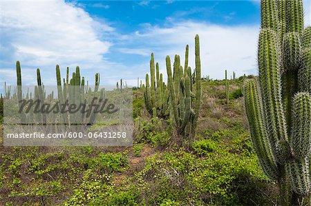 Paysage avec le Cactus, le Parc National Arikok, Aruba, petites Antilles, des Caraïbes