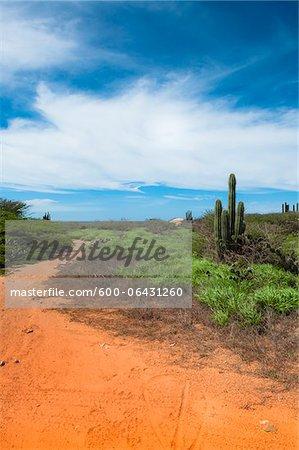 Panoramique avec chemin d'accès et de Cactus, côte nord d'Aruba, Lesser Antilles, Caraïbes