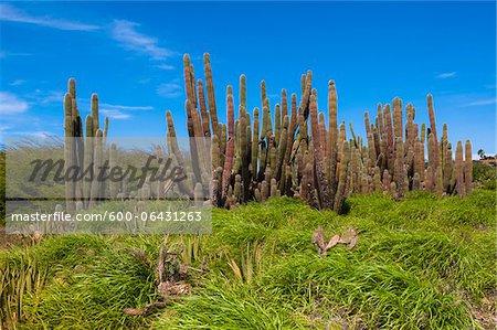 Panoramique avec Cactus, petites Antilles, Aruba, Caraïbes