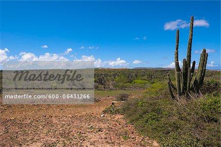 Panoramique avec le Cactus, le Parc National Arikok, Aruba, petites Antilles, des Caraïbes