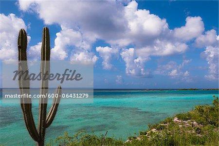 Scenic avec Cactus de côte, Mangel Halto Beach, Aruba, petites Antilles, des Caraïbes