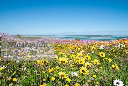 Champ de fleurs dans le paysage rural