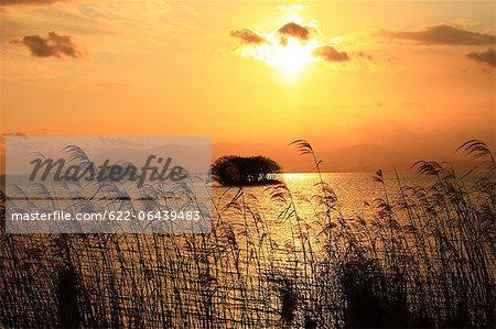 Argentez l'herbe et le lac Biwa, au coucher du soleil, préfecture de Shiga