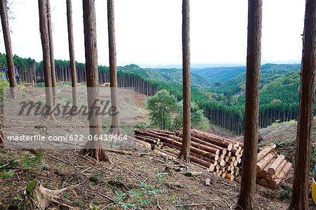 Cut trees in cedar forest, Tochigi Prefecture
