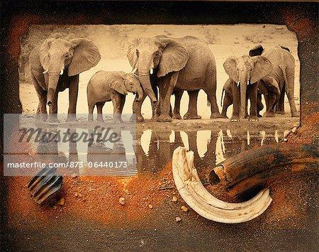 Troupeau éléphant à eau avec Collage de sable et de défenses