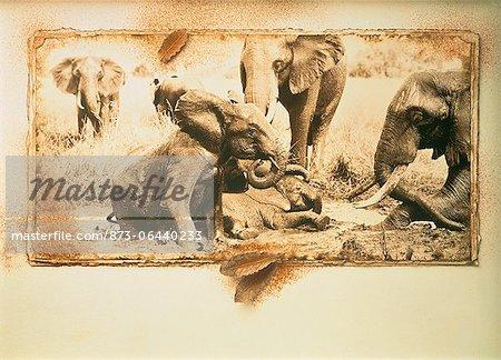 Veaux d'éléphant jouant à trou d'eau