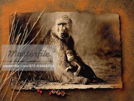 Portrait de babouin avec descendance