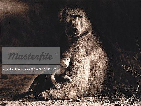 Portrait de la mère et le bébé babouin