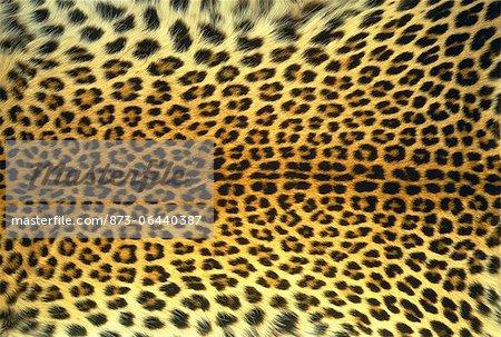Gros plan d'une peau de léopard
