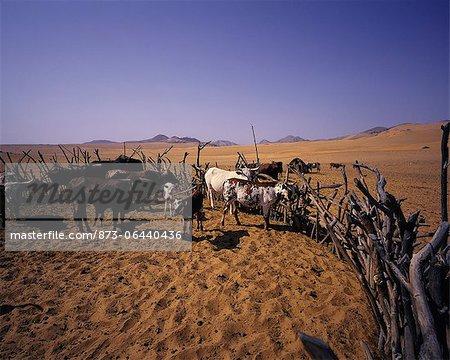 Kraal de bovins dans la région de la rivière Kunene Namibie, Afrique