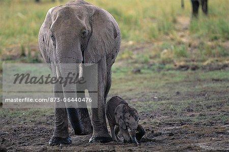 Éléphante avec veau Savuti région près de Parc National de Chobe au Botswana