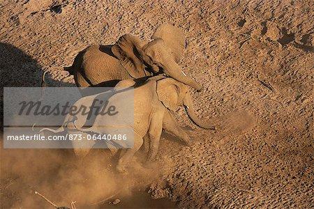 Vue aérienne des éléphants d'Afrique en marche, le Parc National Kruger Mpumalanga, Afrique du Sud