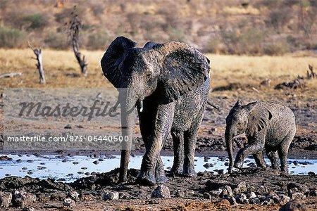 African Elephant mère et veau à trou d'eau Afrique