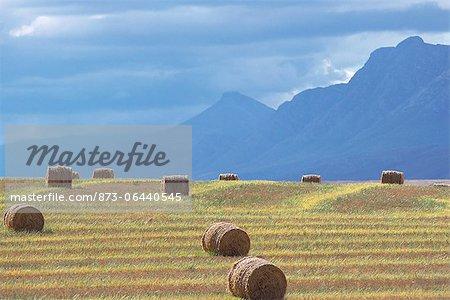 Vue d'ensemble de balles de foin en champ Swellendam, Western Cape Afrique du Sud