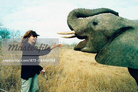 Femme nourrir les éléphants, Hoedspruit, Mpumalanga, Afrique du Sud