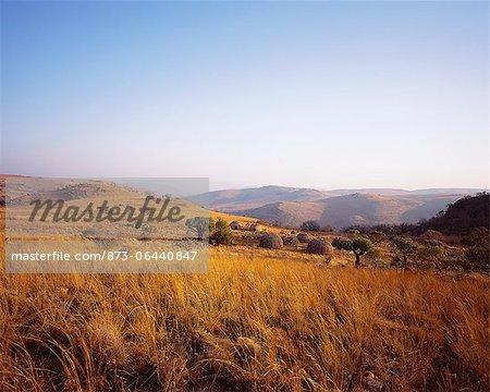 Huttes Zoulous sur Film Set KwaZulu Natal, Zululand