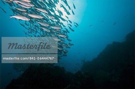 Banc de poissons, Thaïlande, Asie du sud-est, Asie