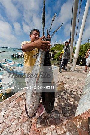 Marché aux poissons locaux, Puerto Ayora, Santa Cruz Island, archipel des îles Galapagos, Equateur, Amérique du Sud
