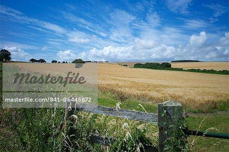 Le South Downs Way, Hampshire, Angleterre, Royaume-Uni, Europe