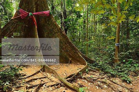 Rainforest, Tiger Cave Temple (Wat Tham Suea), Krabi Province, Thailand, Southeast Asia, Asia