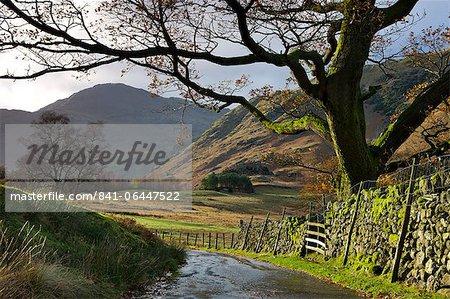 Chemin de campagne menant vers Blea Tarn dans la vallée de Langdale, Parc National de Lake District, Cumbria, Angleterre, Royaume-Uni, Europe