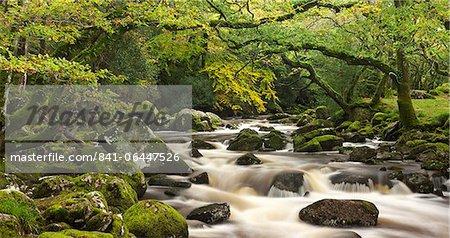 Fluß Plym fließt durch Dewerstone Wood, Dartmoor, Devon, England, Vereinigtes Königreich, Europa