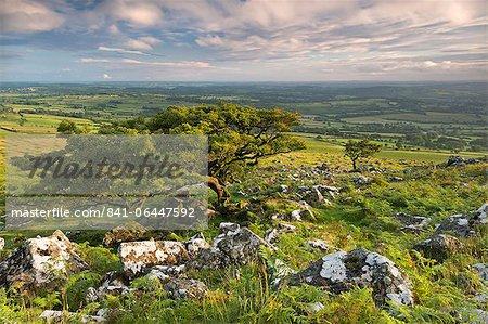 Hawthorn trees on Dartmoor moorland in summer time, Devon, England, United Kingdom, Europe