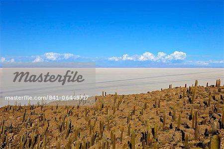 Cacti on Isla de los Pescadores and the salt flats, Salar de Uyuni, Southwest Highlands, Bolivia, South America