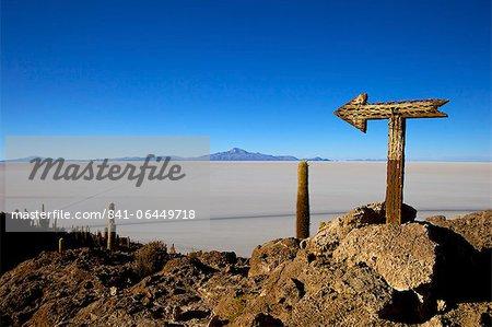 Cactus arrow on Isla de los Pescadores, Volcan Tunupa and the salt flats, Salar de Uyuni, Southwest Highlands, Bolivia, South America