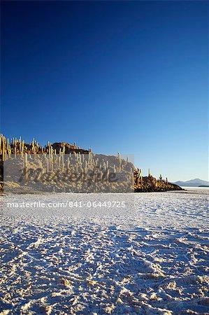 Cacti on Isla de los Pescadores and salt flats, Salar de Uyuni, Southwest Highlands, Bolivia, South America